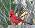 cardinal post blur dp