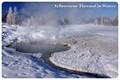 Yelloestone Thermal in Winter
