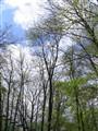 the leafy sky