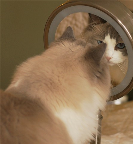 mirror leyla