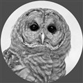 1751678-Owl