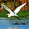 BIRDS 500-2jpg