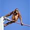 orangutan Washington National Zoo (1 of 1)