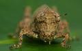 Stacked Locust