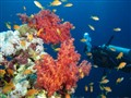 Colors of the Red Sea