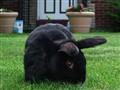 Thomas the Bunny
