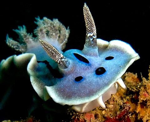 Nudibranch (1 of 1)