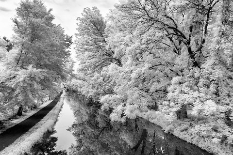 Spring on the Towpath-sm