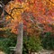 Fall Daingerfield Park copy