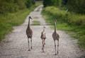 Walking the Kids