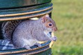 The Squirrel Diet of Trans Fats