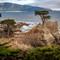 Lone Cypress: OLYMPUS DIGITAL CAMERA