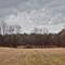 Windrow Meadow