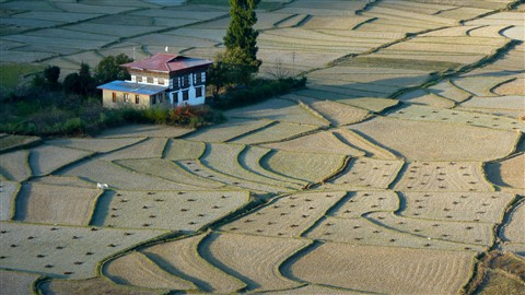 Fields near Paro