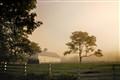 A Foggy Morn