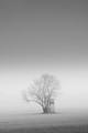 Winter Foggy Morning