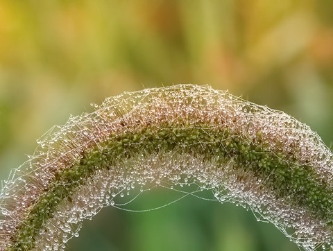 GRASS-DEW-11 (1 of 1)