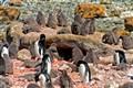Pletheora of penguins