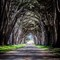 cypress-tree-tunnel