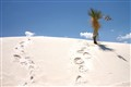 Western Dune