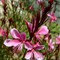 purpleflowers_edited