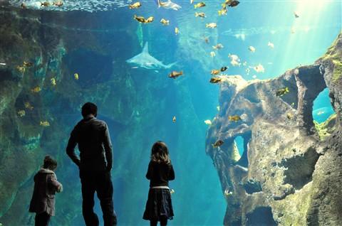 aquarium la rochelle knipser63 galleries digital photography review digital photography review