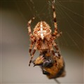 Spider_7802
