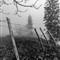 Asturias Fence Mist