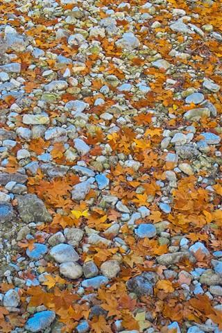 les feuilles et les pierres