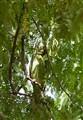 Hidden Parakeet