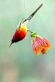 Sunbird & Flower