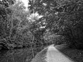 Black and white photo of the C&O Canal during the evening.  This was taken in July near Swains Lock in Maryland.