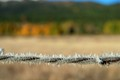 barb wire in frost