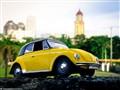Yellow Beet