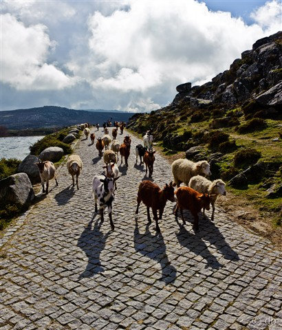 Portugal - Arouca Geopark - The Flock