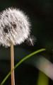Elegant weeds