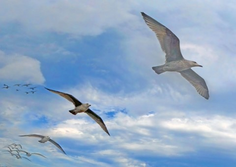 Gulls_Squadron_12-9-16
