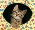 Krazy Kitten