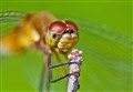 Dragonfly Face, A Thin Slice of Focus