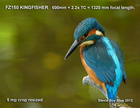 420 Kingfisher DPR Stevie