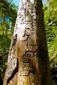Grafifiti in a Tall Tree