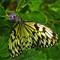 Butterfly2N