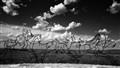 Little Bighorn Indian Memorial