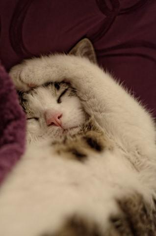 Tired Fur
