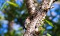 Woodpecker - North Cascades National Park