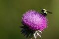 Working Bee - Nikkor 200-500