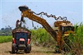 Mechanized harvesting of sugar cane
