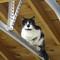 k5II cat garage ISO3200