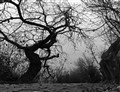 A leafless tree in B&W 1