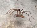 Long Legged Spider